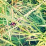 Insect 🠐 ž royalty-vrije stock foto
