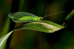 Insect. A small insect like a bug or fly royalty free stock image