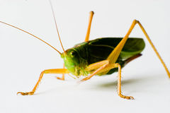 Free Insect Stock Images - 17516244