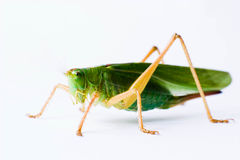 Insect royalty-vrije stock fotografie