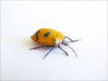Insect 2 van de kleur stock foto's