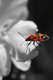 Insect Royalty Free Stock Images