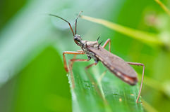 Insect Royalty Free Stock Photo