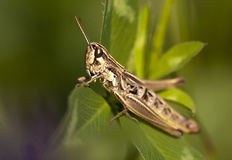 Free Insect Stock Photos - 28450943