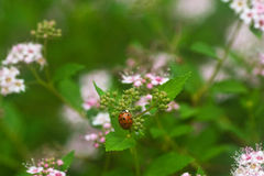 Insect. A garden variety insect on flower Royalty Free Stock Photography