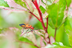 Insect Royalty Free Stock Photos