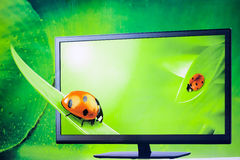 The insect in 3d tv green background. Stock Photos