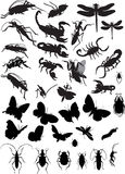Insect. Collect of insect. Vector illustration Royalty Free Stock Photo