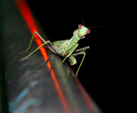 The insect. PREYING MANTIS. Is photographed late at night Stock Images