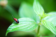 Insect Royalty-vrije Stock Foto