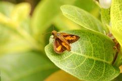 Insect royalty-vrije stock afbeeldingen