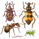 Insect Royalty Free Stock Image