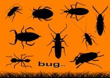 Insect Stock Afbeeldingen