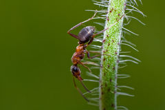 Insect alone Stock Image