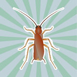 Insect anatomy. Sticker Blattella germanica. cockroach. Sketch of cockroach.  cockroach  hand-drawn cockroach. Vector Royalty Free Stock Image