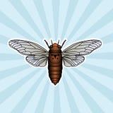Insect anatomy. Sticker cicada. Cicadidae. Chremistica umbrosa. Sketch of cicada.  cicada Design for coloring book. hand Royalty Free Stock Photos