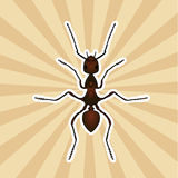Insect anatomy. Sticker Formica exsecta. Sketch of ant.  Ant Design for coloring book. hand-drawn ant. Vector Royalty Free Stock Images