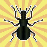 Insect anatomy. Sticker ground beetle bug. Carabidae coleoptera. Sketch of ground beetle. ground beetle Design for Royalty Free Stock Images