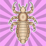 Insect anatomy. Sticker  head human louse. Pediculus humanus capitis. Sketch of louse. louse Design for coloring book Royalty Free Stock Photos