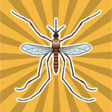 Insect anatomy. Sticker realistic mosquito. Culex pipiens Mosquito silhouette. mosquito Design for coloring book.  Royalty Free Stock Images