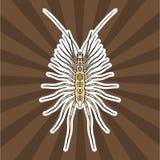 Insect anatomy. Sticker Scutigera coleoptrata. millipede.  House centipede Sketch of millipede.. Millipede Design for coloring book. hand-drawn millipede Stock Photography