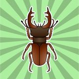 Insect anatomy. Sticker stag-beetle. Lucanus cervus. Sketch of stag-beetle. stag-beetle Design for coloring book. hand Royalty Free Stock Photography