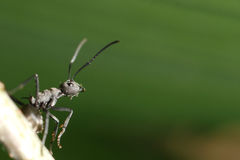 Insect ant background Stock Image