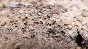 Insect ants on soil