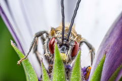 Insect background Royalty Free Stock Photography