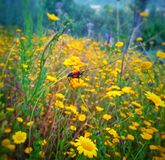 Insect. Beautiful flowers with insect Stock Photography