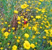Insect. Beautiful flowers with insect Royalty Free Stock Photos