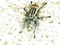 Insect. A beautiful picture of a still insect taken silently Stock Images