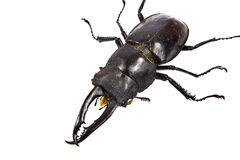 Insect, beetle, rhino beetle bug Stock Photo