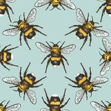 Insect Beetle Seamless Pattern, Background With Engraved Animal Hand Drawn Style Stock Images