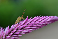 Insect on big violet flower. Royalty Free Stock Photos