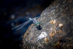 Insect bij de rivier Stock Foto's