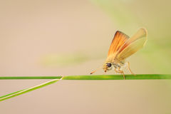Insect on a blade of grass Stock Image