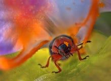 Insect in Bloem royalty-vrije stock afbeeldingen