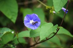 Insect on a Blue flower stock images