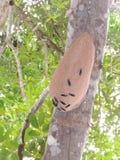 Insect in Bolivië, Zuid-Amerika stock fotografie