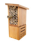 Insect box Stock Image