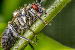 Insect on branch Stock Photo