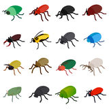 Insect bug icons set, isometric 3d style. Insect bug icons set in isometric 3d style  on white background Stock Images