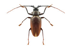 Insect bug isolated Stock Images