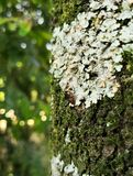Insect bug on a tree trunk covered with lichens, fungi and moss stock images