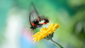 Insect butterfly on a flower stock video footage