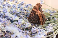 Insect butterfly hive. Butterfly hives in lavender bouquet stock photos
