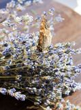 Insect butterfly hive. Butterfly hives in lavender bouquet royalty free stock photo