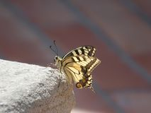 Insect, Butterfly, Moths And Butterflies, Invertebrate royalty free stock photography