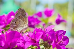 Insect butterfly in pink flower garden. Insect butterfly in pink flower garden animal life Stock Photography